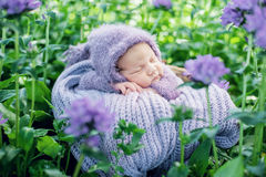 17 day old Smiling newborn baby is sleeping on his stomach in the basket on nature in the garden outdoor. Royalty Free Stock Image