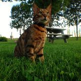 A day at the park. Cat on Herbe Stock Photo