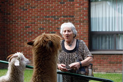 Day at the petting zoo for seniors Stock Photos