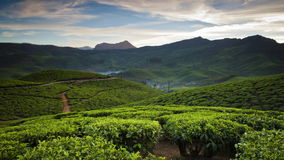 A day`s timelapse over a tea plantation among the mountains in India. Andreev. A day`s timelapse over a tea plantation among the mountains in India. The clouds stock video