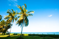 Day sun light nearby the beach Royalty Free Stock Photo