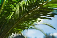 Day sunlight and green palm branches. Day sunlight is seen through green bushes. Photo can be used as background for quotes Stock Image