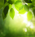 Day in sunny forest Stock Photography