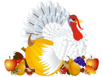 Day of Thanksgiving turkey on white background. Stock Photo