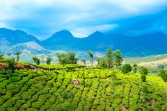 Day time of India with green tea plantations, hills and mountain stock photos