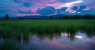 Day To Night At Rice Field. Timelapse day to night with colorful sky over rice field with reflection of light and color in water,Thailand stock video footage