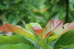 A day in a tropical farm royalty free stock photos