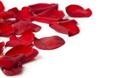 Day Valentine rose petals as background Royalty Free Stock Photo