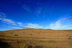 Day view of Autumn scene at Inner Mongolia. China royalty free stock images