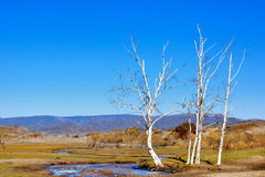 Day view of Autumn scene at Inner Mongolia. China royalty free stock photo