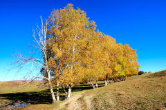 Day view of Autumn scene at Inner Mongolia. China stock photos