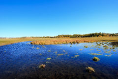 Day view of Autumn scene at Inner Mongolia. Day view of Autumn scene at small pond stock image