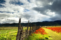 Day view of highland in Zhongdian China Stock Photos