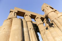 Huge columns as lotus flower Luxor temple. Day view of Luxor Temple Luxor, Egypt royalty free stock photos