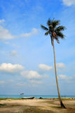 Day view of sand beach with coconut tree. Malaysia royalty free stock photo
