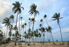 Day view of sand beach with coconut trees. Malaysia royalty free stock photo