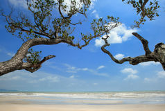 Day view of sand beach with trees. In Malaysia royalty free stock photography