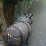 Day at the zoo rhino Stock Image
