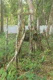 Dayaks cmentarz Zdjęcia Stock