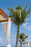Daybeds at luxury tropical spa, palm trees Royalty Free Stock Image