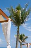 Daybeds am tropischen Luxuxbadekurort, Palmen Lizenzfreies Stockbild
