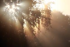 daybreak royalty-vrije stock afbeeldingen