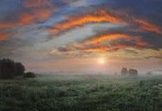 Daybreak on the meadow Stock Photo