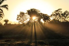 Daybreak in Pantanal Royalty Free Stock Photography