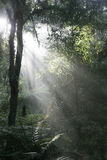Daybreak in tropical forest. Daybreak with mist. Rays of sunlight in the forest early in the morning Stock Images