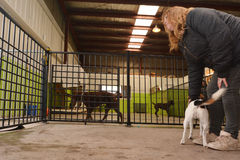 Daycare собаки стоковое изображение rf
