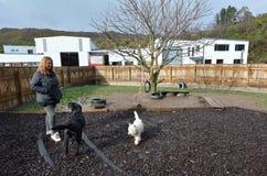 Daycare собаки стоковые фотографии rf