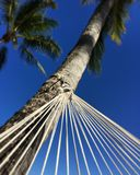 Daydreaming. Abstract photo of hammock blue sky and palm tree Royalty Free Stock Images