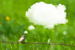 Daydreaming bird on barb wire Stock Photography