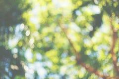 Daylight bokhe from tree Stock Photos