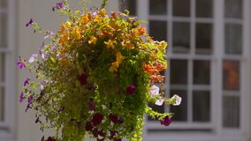A hanging pot of fresh flowers and ferns in midair