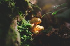 Daylight, Environment, Fungus Stock Photo