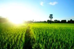 Daylight flooded fields. Royalty Free Stock Photography
