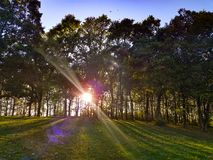Daylight forest. Day light forest clearing banner royalty free stock image