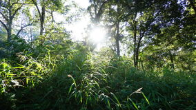 Sunlight in tropical forests (time lapse) stock video footage