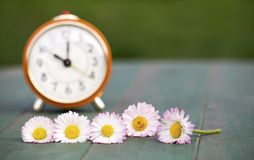Daylight savings concept, clock and flowers. Daylight savings, spring forward concept - web banner of a red alarm clock and daisy flowers royalty free stock photography