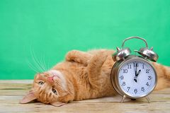 Daylight Savings Tabby cat laying upside down. Orange ginger tabby cat laying on a wood table upside down paws in the air, green background next to an old Stock Image