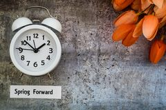 Daylight Savings Time Spring Forward concept flat lay. Daylight Savings Time Spring concept top down view with white clock and orange tulips on gray distressed stock photo