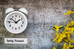 Daylight Savings Time Spring Forward concept flat lay. Daylight Savings Time Spring concept top down view with white clock and yellow forsythia flowers on gray royalty free stock image