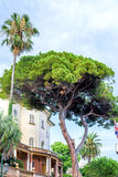 Daylight view to a green tree near buildings of Santa Margherita Ligure Stock Images