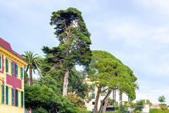 Daylight view to a green tree near buildings of Santa Margherita Ligure Royalty Free Stock Photos