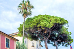 Daylight view to a green tree near buildings of Santa Margherita Ligure Stock Photos