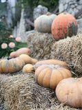 Daylight view to harvested pumpkins on dried hay bales Stock Photo