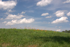 daylilly λόφος στοκ εικόνες