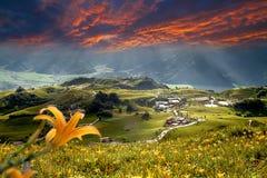 daylily blommaberg Arkivbild