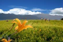 Daylily dans la montagne avec la couleur gentille de la BG Image libre de droits
